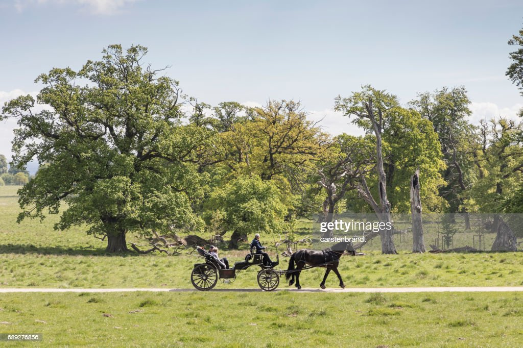 Tourists in a horse driven carriage : Stock Photo