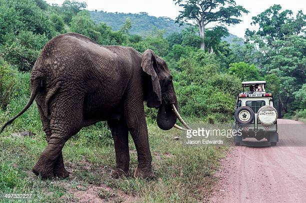 Tourists in a safari 4WD watching an African Elephant feeding beside a dirt road.
