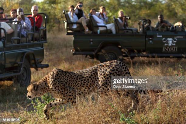 Tourists in a safari vehicle watch a cheetah during a game drive on March 29 2015 at the Sabi Sands private game reserve in the eastern province of...