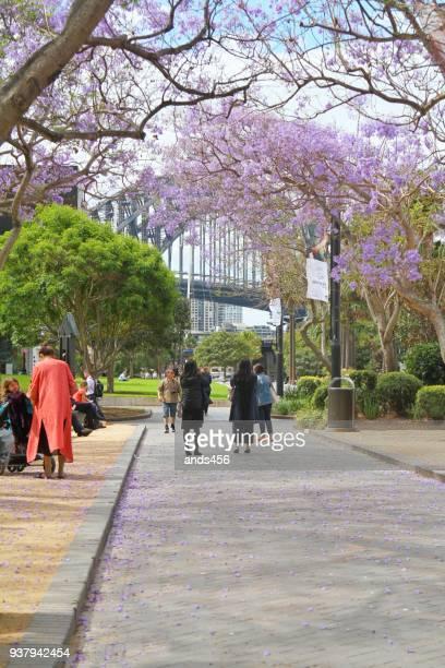 シドニー ハーバー ブリッジ付近の公園で観光客 - jacaranda ストックフォトと画像