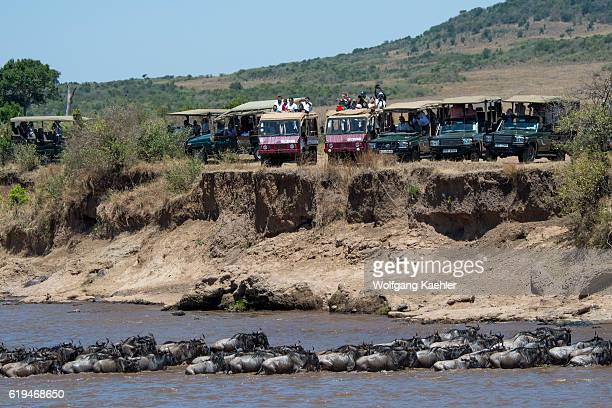 Tourists in safari vehicles watching the Wildebeests also called gnus or wildebai crossing the Mara River in the Masai Mara National Reserve in Kenya