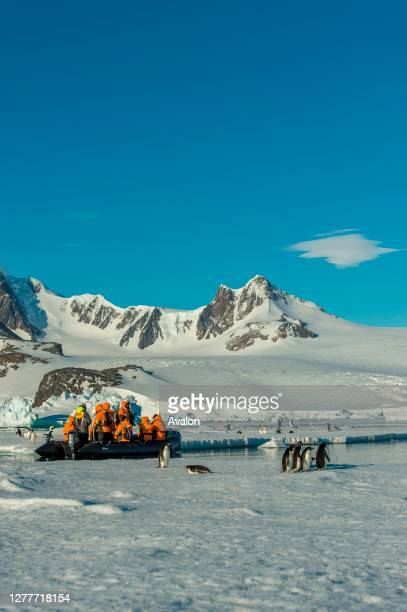 Tourists in zodiac exploring Adelie penguins on ice floes at Hope Bay in the Antarctic Peninsula region.