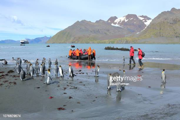tourists leaving gold harbour beach in inflatable raft, south georgia. - atlantic islands stock pictures, royalty-free photos & images