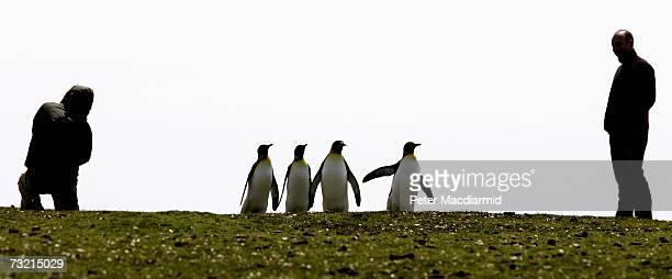 Tourists look at a King penguin colony on February 5 2007 at Volunteer Point Falkland Islands Tourism is a growing part of the economy in the...