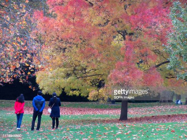 Tourists look at the colourful leaves as Trees in London's Hyde Park give some real Autumn colours to the capital's most famous open space.