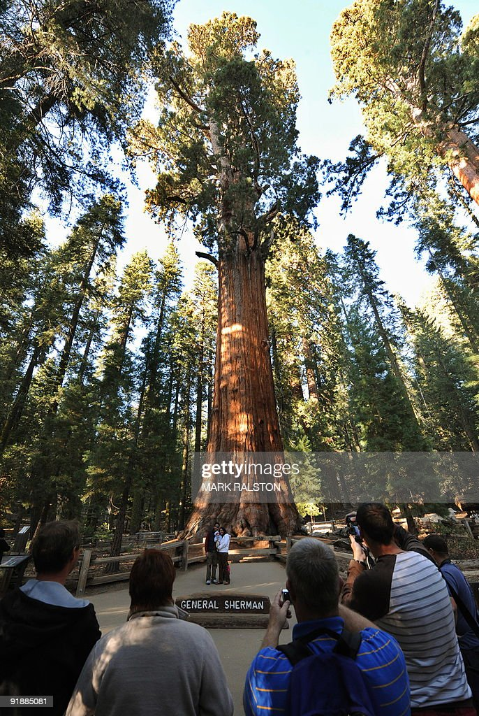 Tourists look at the General Sherman Gia : News Photo