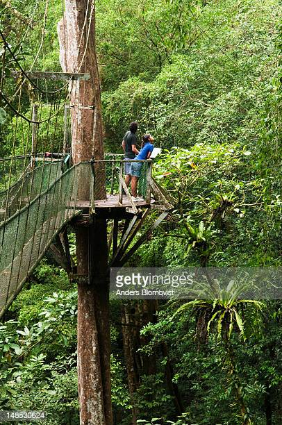 Tourists looking for birds from Mulu Canopy Skywalk in thick rainforest.