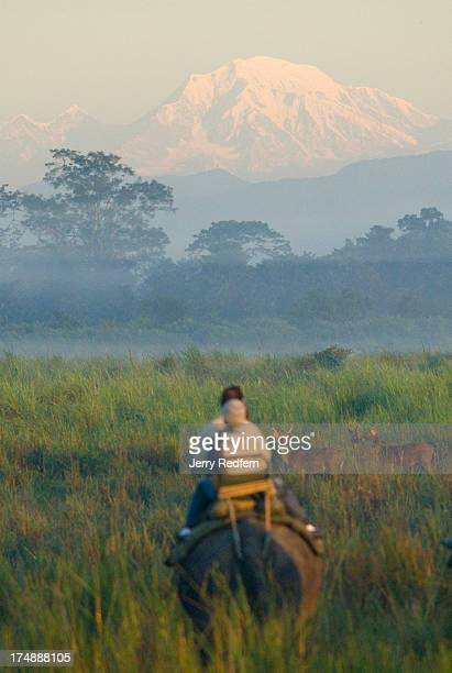 Tourists looks on as the Himalayas are lit by the rising sun as it rises above the floodplains of the Brahmaputra River as seen from inside Kaziranga...