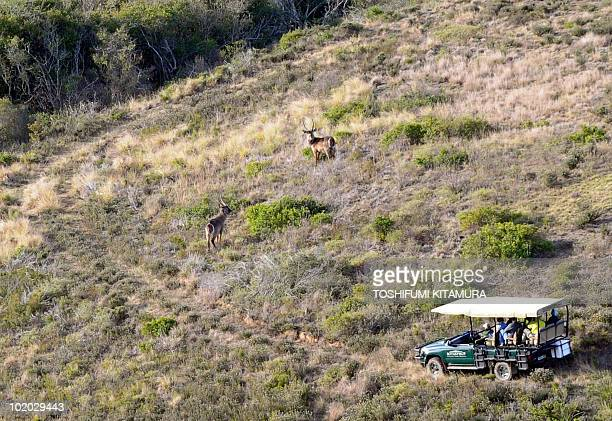 Tourists observe South Africa's wildlife during a safari in the Little Brak River suburb of Mossel Bay some 400 km east of Cape Town on June 12 2010...
