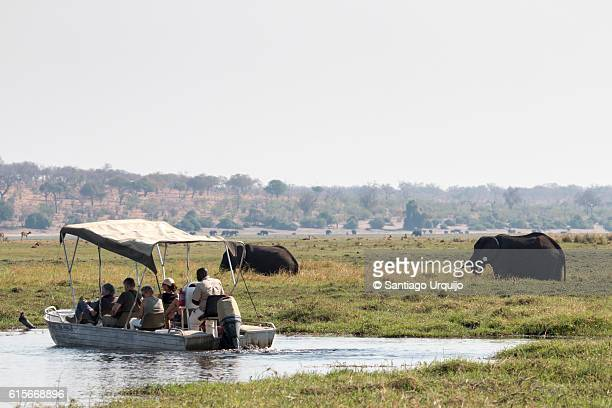 Tourists observing African elephants in Chobe River
