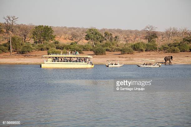 Tourists observing African elephants on bank of Chobe River