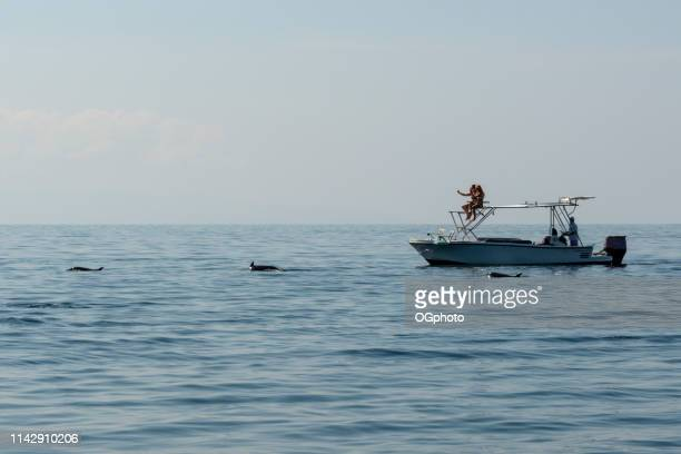 tourists on a dolphin watching tour - ogphoto stock photos and pictures