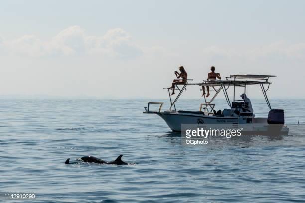 turister på en delfin skådning turné - ogphoto bildbanksfoton och bilder