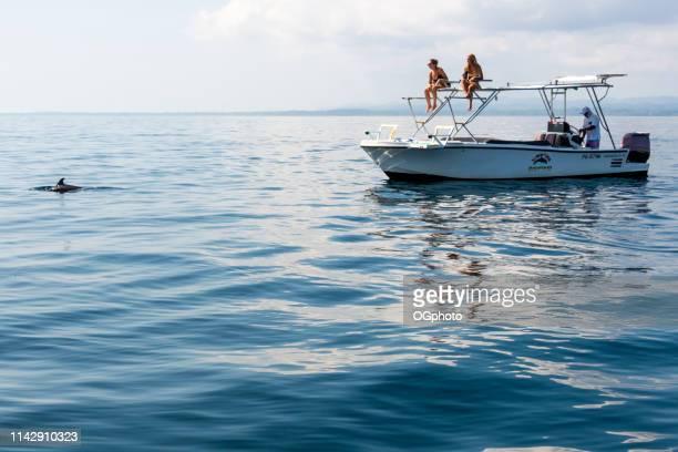 turistas em uma excursão de observação do golfinho - ogphoto - fotografias e filmes do acervo