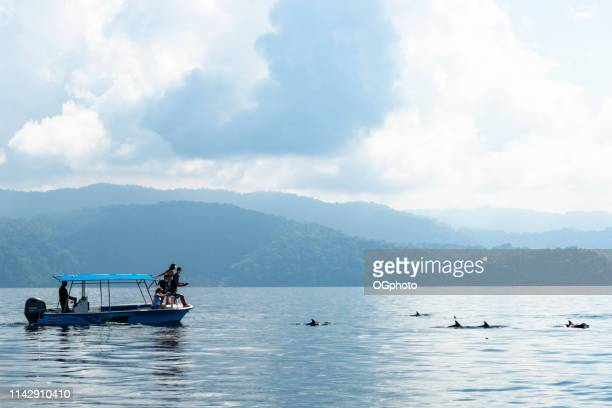 tourists on a dolphin watching tour - ogphoto stock pictures, royalty-free photos & images