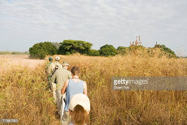 tourists on a guided safari game walk - rear view - south luangwa national park stock pictures, royalty-free photos & images