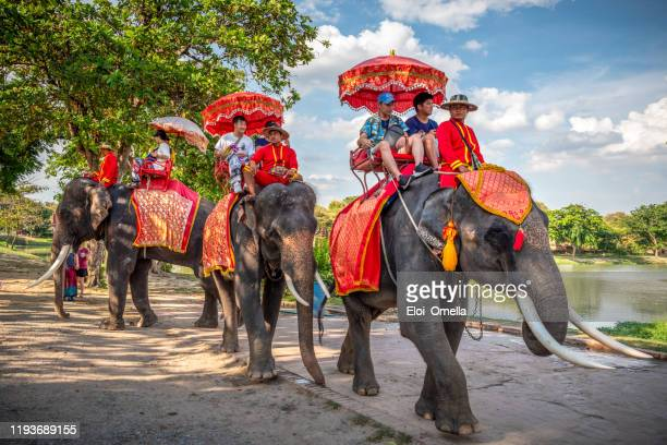 tourists on an elephant ride tour in ayutthaya, thailand - ayuthaya province stock pictures, royalty-free photos & images