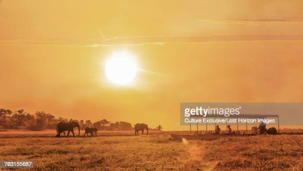 Tourists on boat watching elephants by river, Chobe national park, Zambia, Africa