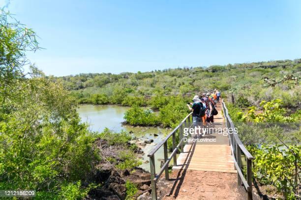 turistas en puente mirando el paisaje volcánico de galápagos, ecuador - isla de santa cruz islas galápagos fotografías e imágenes de stock