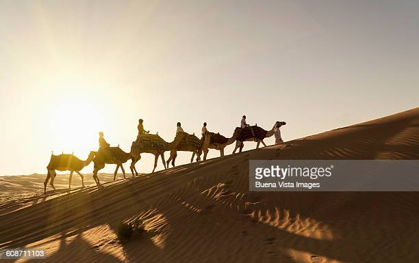 tourists on camels in the desert at sunset - uae heritage stock photos and pictures