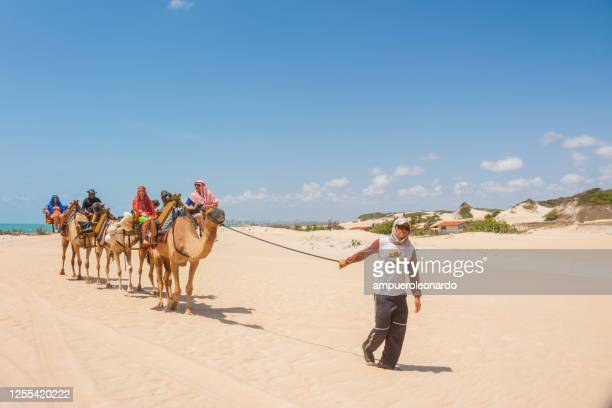 tourists on camels train in genipabu led by guide - natal northeast of brazil - dunes arena stock pictures, royalty-free photos & images