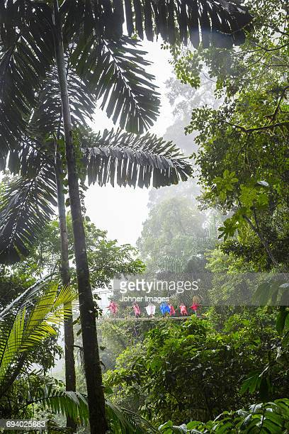 Tourists on rope bridge in rainforest