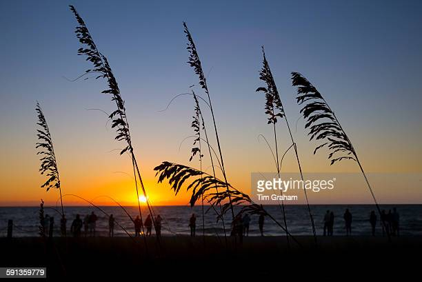Tourists on the beach seen through Sea Oats grasses at sunset on Captiva Island in Florida USA