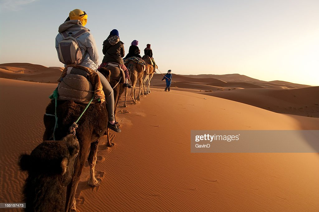 Tourists on train of camels in Sahara led by guide : Stock Photo