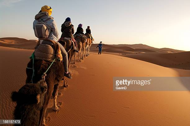 tourists on train of camels in sahara led by guide - toerist stockfoto's en -beelden