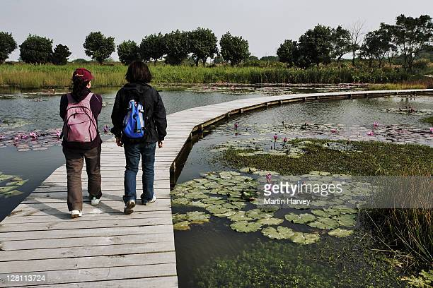 Tourists on walkway over pond with water lilies at the Mai Po Marshes Nature Reserve, Hong Kong, China