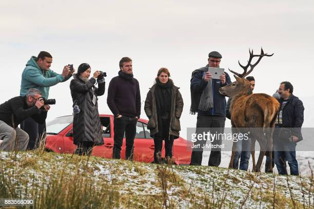 Tourists photograph a red dear stag visiting a car park near Glen Coe on December 1 2017 in Glen CoeScotland On the first day of the meteorological...
