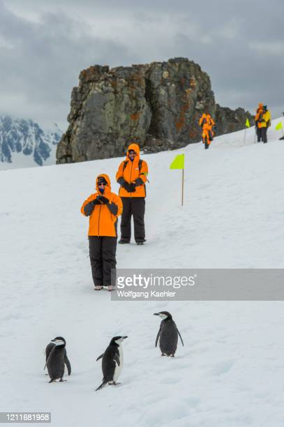 Tourists photographing Chinstrap penguins on snow at Halfmoon Island, South Shetland Islands off the coast of Antarctica.