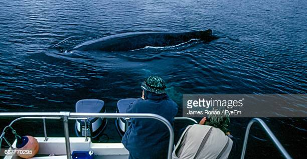 Tourists Photographing Whale In Sea
