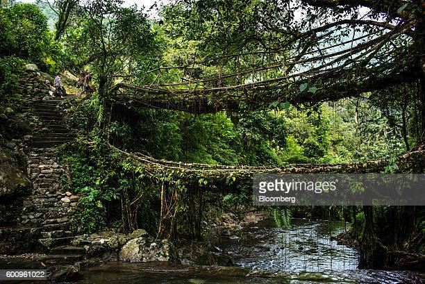 Tourists prepare to cross a bridge known as a 'living root bridge' in Mawlynnong Meghalaya India on Monday Aug 15 2016 Two years of deficient...