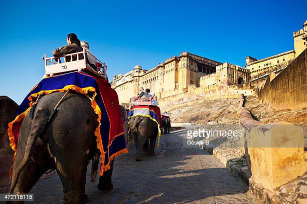 tourists ride elephants, jaipur (india) - amber fort stock pictures, royalty-free photos & images