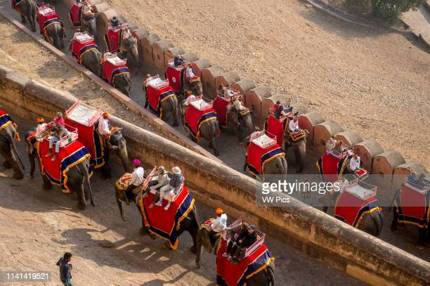 Tourists ride elephants to the Amer Fort in Jaipur, India.