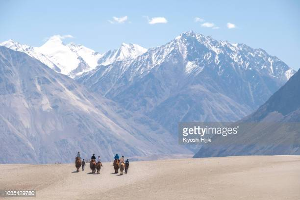 Tourists riding camel in sand dune in Nubra valley, Ladakh, India