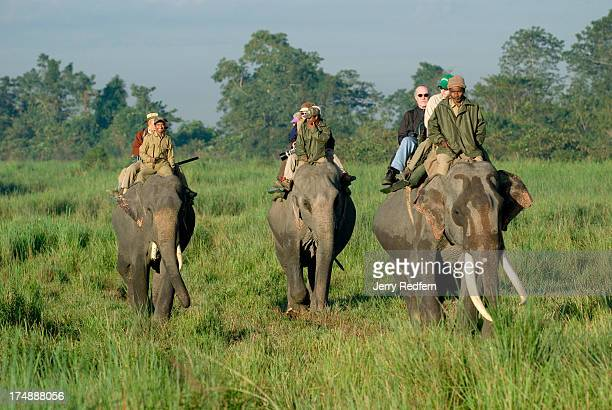 Tourists riding elephantback ride through Kaziranga National Park These earlymorning elephant rides are a popular tourist draw Kaziranga National...