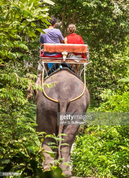 Tourists riding on elephant in jungle