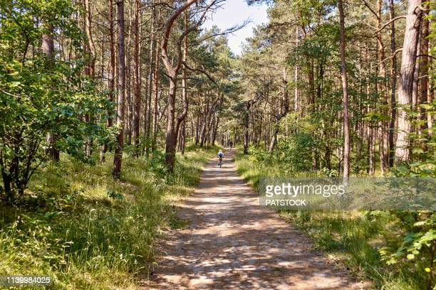 tourists riding their bicycles on a forest path in sobieszewska island, gdansk - gdansk stock pictures, royalty-free photos & images