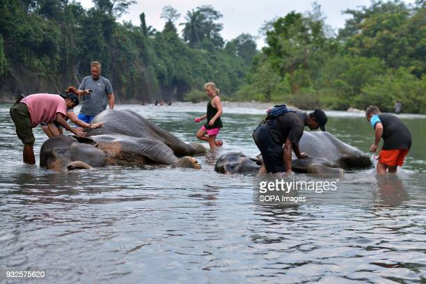 Tourists seen bathing an elephant At Elephant and Ecotourism Gunung Leuser National Park tourists can help bathing elephants on the outskirts of...