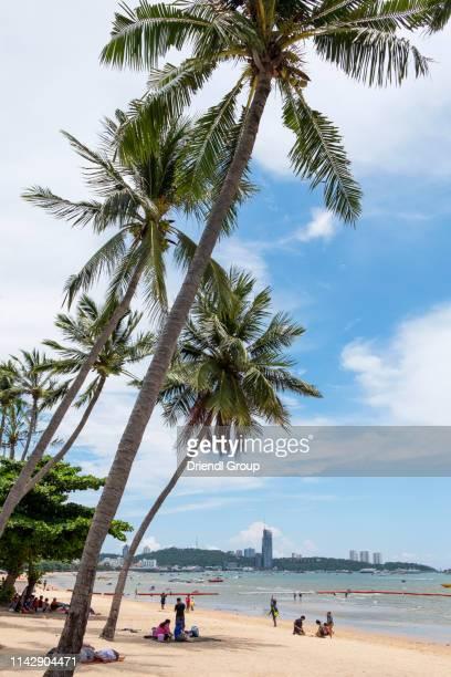 tourists sitting under palm trees on pattaya beach. - golf von thailand stock-fotos und bilder