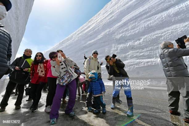 Tourists snap away at the towering snow walls while walking through the Tateyama Kurobe Alpine Route's 'Yuki no Otani' on Tateyama Toyama [COUNTRY]...