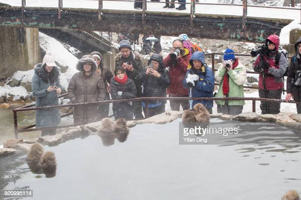 Tourists take photographs as snow monkeys relax in the hot spring bath at the Jigokudani Yaenkoen wild snow monkey park in Jigokudani Valley on...