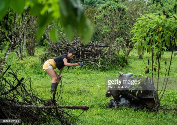 Tourists take photos of mating giant tortoises in the highlands of Santa Cruz island on January 18 2019 in Galapagos Islands Ecuador A growing human...