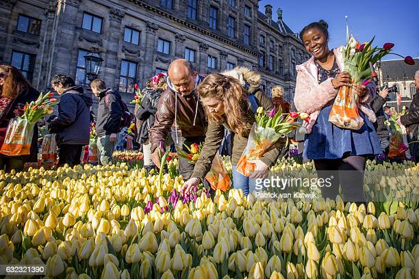 Tourists take tulips during the Dutch National Tulip Day in front of the Royal Palace at Dam Square with the theme 'share joy give tulips' on January...