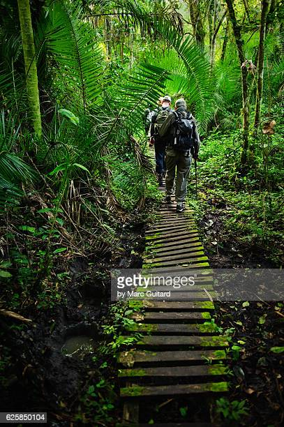 Tourists tracking chimpanzees (Pan troglodytes) in Kibale Forest National Park, Uganda