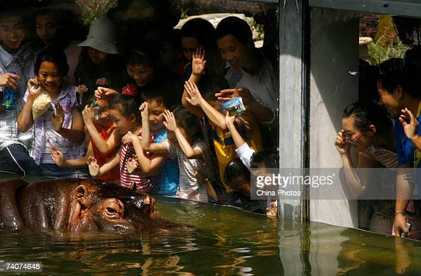 Tourists view a hippo at the Chongqing Zoo on May 4 2007 in Chongqing Municipality China Animal welfare has become a concern in China in recent years...