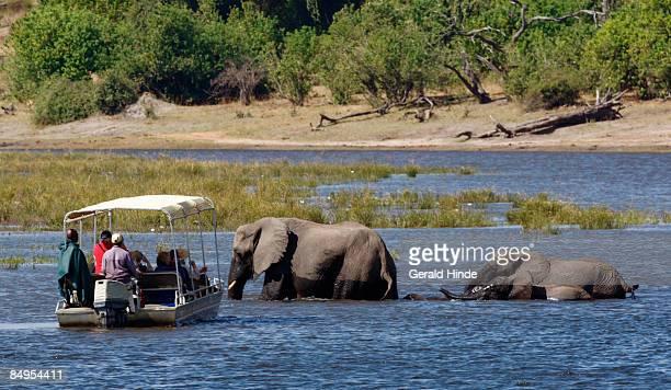 Tourists viewing elephants in water, Chobe, Botswana