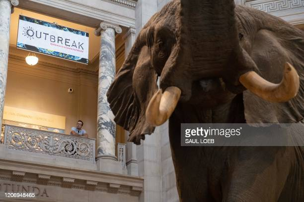 Tourists visit the Smithsonian National Museum of Natural History in Washington, DC, March 13, 2020. The Smithsonian museums will temporarily close...